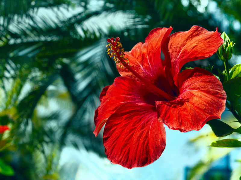 Big Island Flora Fauna